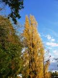 Paesaggio e pioppo di autunno sul fiume di Cher in Touraine fotografia stock