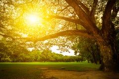Paesaggio e tramonto della natura Immagine Stock