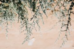 Paesaggio e vegetazione del deserto nel deserto fotografia stock