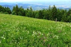 Paesaggio e vegetazione della foresta nera Fotografia Stock Libera da Diritti