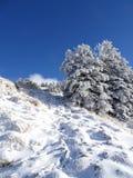 Paesaggio ed alberi di Snowy con un cielo blu Fotografia Stock Libera da Diritti