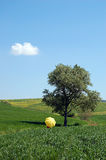 Paesaggio ed ombrello giallo Fotografia Stock Libera da Diritti