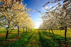 paesaggio Erba verde ed alberi Immagini Stock