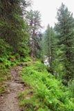 Paesaggio europeo delle alpi della valle Tirolo Austria di Zillertal Fotografia Stock Libera da Diritti