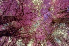 Paesaggio fantastico degli alberi porpora veduti da sotto fotografia stock