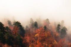 Paesaggio fantastico della foresta di autunno, lotti degli alberi nella nebbia fotografie stock