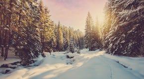 Paesaggio fantastico della foresta di inverno nel tramonto Glowin nevoso ghiacciato degli abeti al sole Concetto di vacanza inver fotografia stock