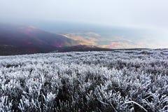 Paesaggio fantastico di autunno con gelo fotografia stock