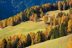Paesaggio fantastico di autunno con il larice giallo in un giorno soleggiato Dol Immagini Stock Libere da Diritti