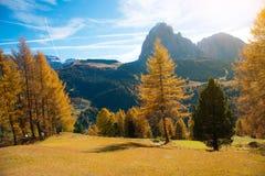 Paesaggio fantastico di autunno con il larice giallo in un giorno soleggiato Dol Fotografia Stock