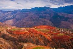 Paesaggio fantastico di paesaggio, giacimenti di grano variopinti sulla terra rossa di Dongchuan Il sole splende giù intorno ai g fotografia stock