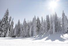Paesaggio fantastico di inverno fotografia stock libera da diritti