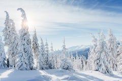 Paesaggio fantastico di inverno Tramonto magico nelle montagne un il giorno gelido La vigilia della festa La scena drammatica immagine stock