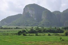 Paesaggio fertile di Vinales, Cuba Fotografia Stock
