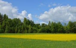 Paesaggio finlandese della campagna con il campo giallo del seme di ravizzone Fotografia Stock