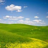 Paesaggio fiorito Fotografia Stock