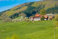 Paesaggio in Fischerbach-Mitteltal Immagini Stock Libere da Diritti