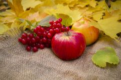 paesaggio Foglie, mele e viburno di autunno su tela da imballaggio immagine stock