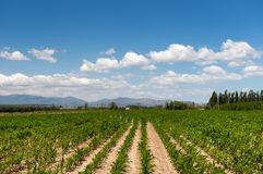 Paesaggio francese di agricoltura Fotografia Stock Libera da Diritti