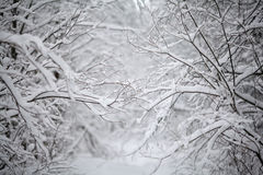 Paesaggio freddo della foresta di inverno nevoso Fotografia Stock