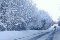 Paesaggio freddo della foresta di inverno nevoso Immagine Stock