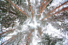 Paesaggio freddo della foresta di inverno nevoso Immagini Stock