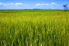 paesaggio fresco di verde di erba del granulo Fotografia Stock