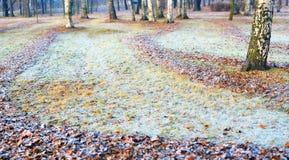 paesaggio Geli nei giardini, brina di autunno su un'erba Fotografie Stock