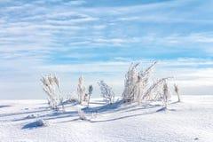 Paesaggio gelido Immagine Stock