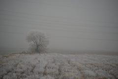 Paesaggio gelido Fotografia Stock