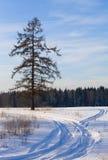 Paesaggio gelido della foresta Immagini Stock