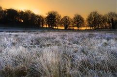 Paesaggio gelido di inverno attraverso il campo ad alba Immagini Stock Libere da Diritti