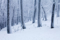 Paesaggio gelido di inverno degli alberi immagini stock libere da diritti