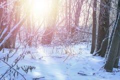 Paesaggio gelido di inverno nel concetto nevoso di vacanze invernali della foresta Alberi coperti di neve sulla sera gelida Bello fotografie stock libere da diritti