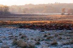 Paesaggio gelido in Richmond Park fotografia stock libera da diritti