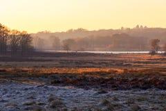 Paesaggio gelido in Richmond Park immagine stock libera da diritti