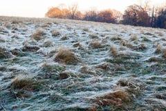 Paesaggio gelido in Richmond Park fotografia stock