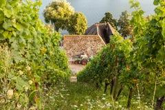 Paesaggio Germania di agricoltura della vite della vigna di Mosella Fotografie Stock Libere da Diritti