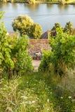 Paesaggio Germania di agricoltura della vite della vigna di Mosella Fotografia Stock