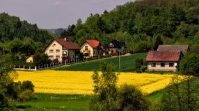 Paesaggio giallo di panorama del villaggio del campo di agricoltura Immagine Stock Libera da Diritti