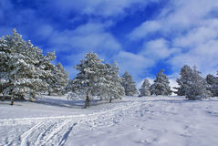 Paesaggio H di inverno Immagine Stock