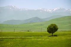 Paesaggio idilliaco con il singolo albero e montagne su fondo Immagini Stock Libere da Diritti