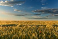 Paesaggio idilliaco dei campi agricoli al tramonto Immagine Stock