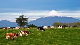 Paesaggio idilliaco del vulcano dell'Osorno nel Cile Fotografie Stock Libere da Diritti