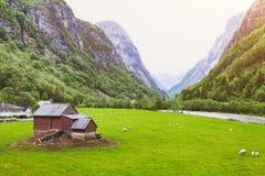 Paesaggio idilliaco dell'allevamento di pecore in Norvegia Fotografia Stock