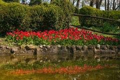 Paesaggio idilliaco della molla con i tulipani rossi vicino al lago Immagini Stock Libere da Diritti
