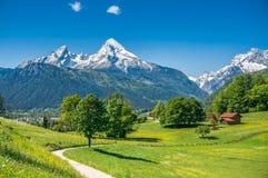 Paesaggio idilliaco della molla nelle alpi con i prati ed i fiori Immagini Stock Libere da Diritti