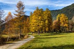 Paesaggio idilliaco della montagna nelle alpi con la traccia di escursione Plateau di Mieminger, Austria, Tirolo Fotografia Stock