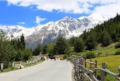 Paesaggio idilliaco di estate con le montagne e le mucche nelle alpi fotografia stock libera da diritti