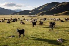 Paesaggio idilliaco di Orkhon Fotografia Stock Libera da Diritti